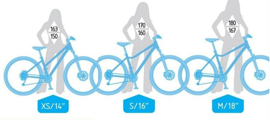 woman-bike-size